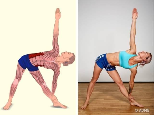 18张高清瑜伽体式解剖图,精确科学拉伸很重要!